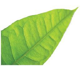 Leaf 10-12-10 4